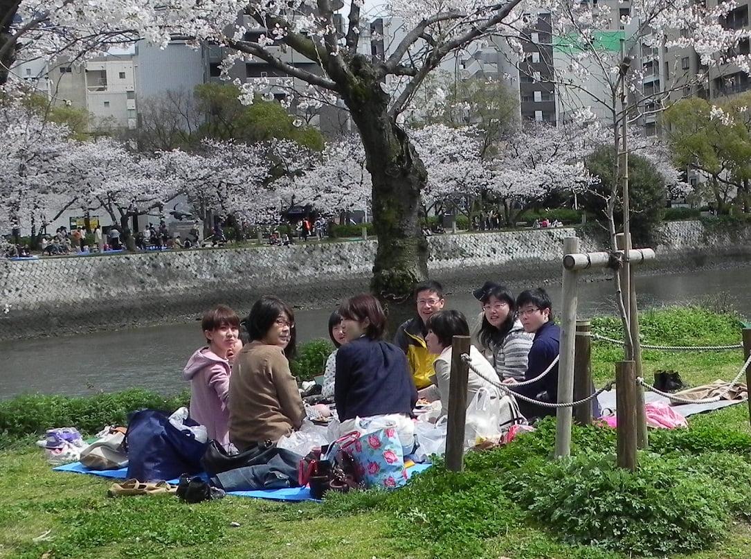 Sakura in Giappone